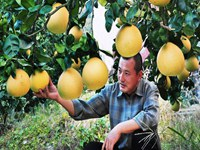 """谢明辉在雅大烤酒设备帮助下获""""柚子酿酒""""发明专利"""