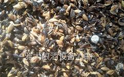 用雅大酿酒设备制作液态黑大麦白酒的酿造方法
