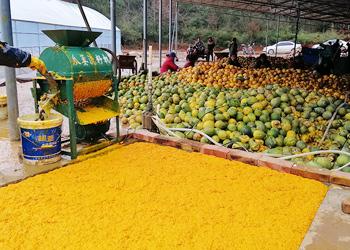 雅大大型酿酒设备厂家将瓜蒌肉酿成酒,让果农的利润翻几倍!